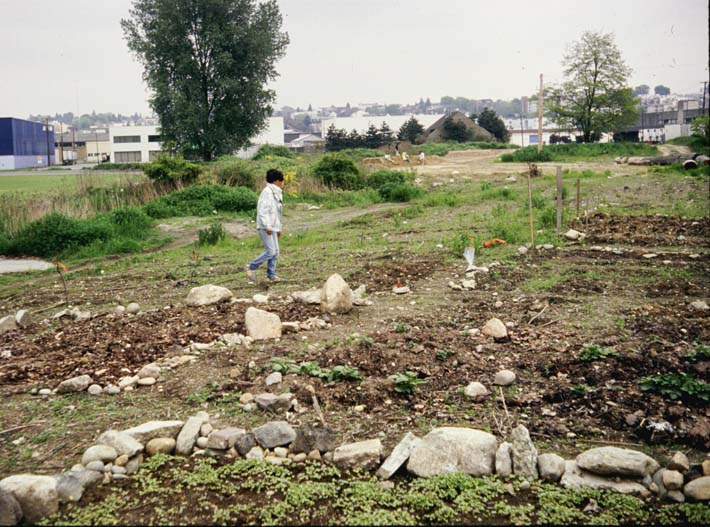 early plots being installed (1991)